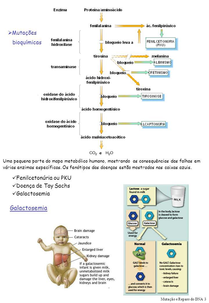 Mutações bioquímicas Uma pequena parte do mapa metabólico humano, mostrando as consequências das falhas em várias enzimas específicas. Os fenótipos da