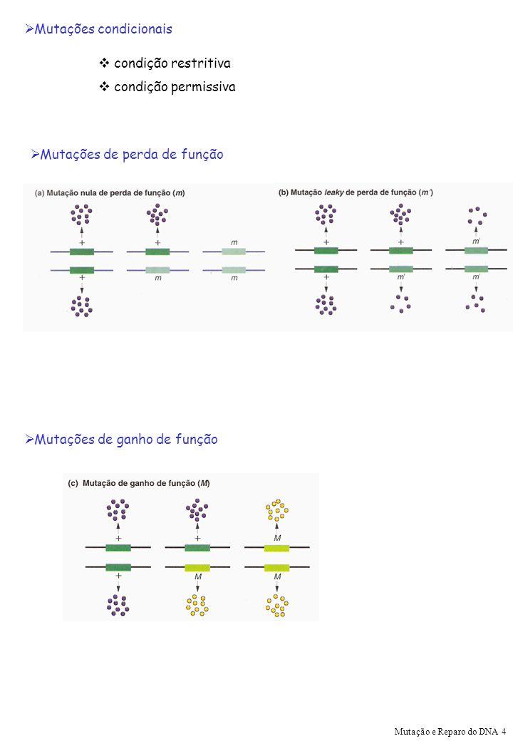 Mutações condicionais condição restritiva condição permissiva Mutações de perda de função Mutações de ganho de função Mutação e Reparo do DNA 4