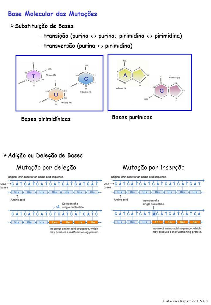 Base Molecular das Mutações Substituição de Bases - transição (purina purina; pirimidina pirimidina) - transversão (purina pirimidina) Bases pirimidín
