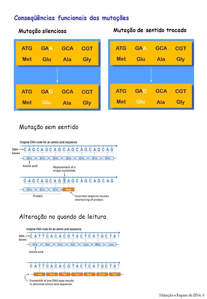 Conseqüências funcionais das mutações Mutação silenciosa Mutação de sentido trocado Mutação sem sentido Alteração no quando de leitura Mutação e Repar