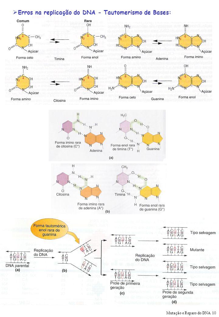 Erros na replicação do DNA - Tautomerismo de Bases: Mutação e Reparo do DNA 10