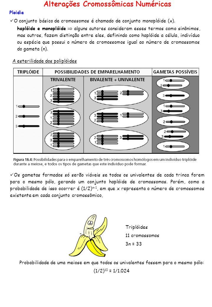 Ploidia O conjunto básico de cromossomos é chamado de conjunto monoplóide (x). haplóide e monoplóide alguns autores consideram esses termos como sinôn