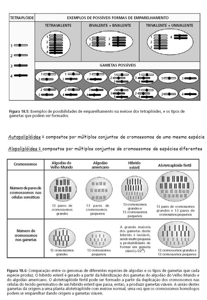 Alopoliplóides = compostos por múltiplos conjuntos de cromossomos de espécies diferentes Autopoliplóides = compostos por múltiplos conjuntos de cromos
