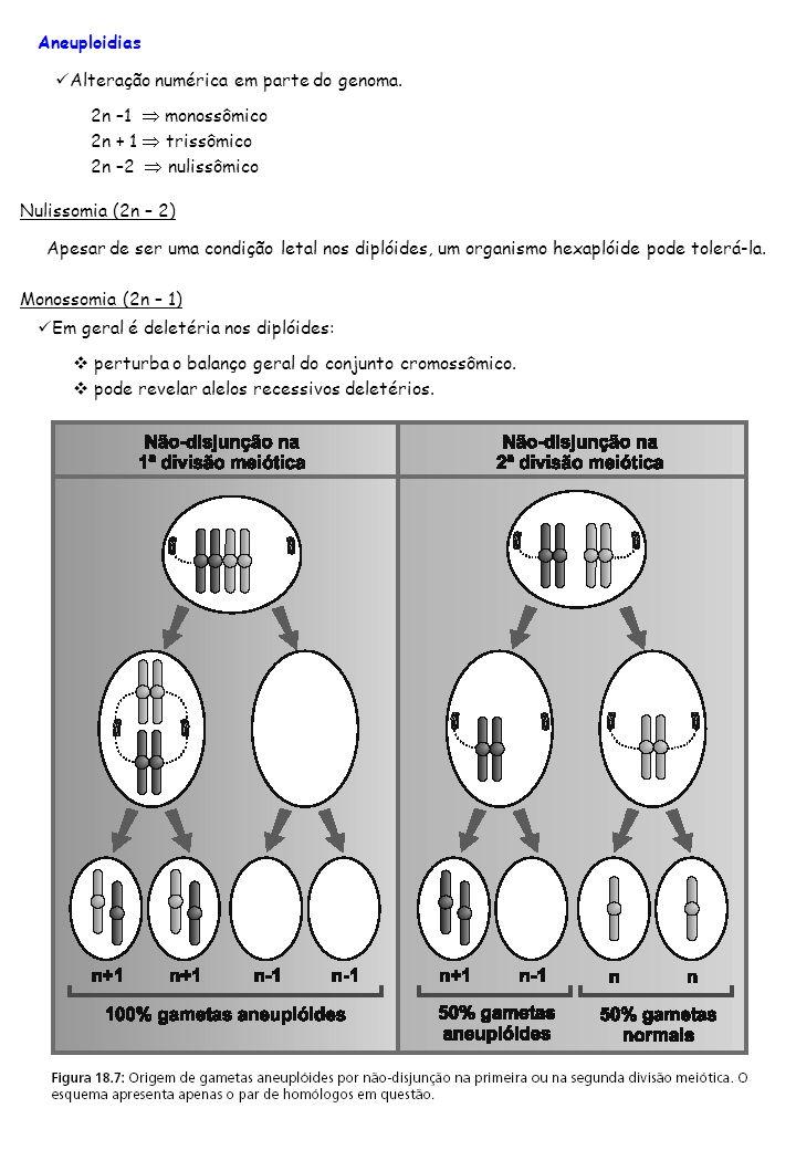 Aneuploidias Nulissomia (2n – 2) Alteração numérica em parte do genoma. 2n –1 monossômico 2n + 1 trissômico 2n –2 nulissômico Apesar de ser uma condiç