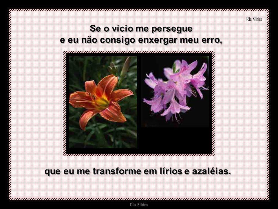 Ria Slides Quando eu não tiver prudência, e a doença aproveitar o meu descuido, que eu deixe surgir a flor do maracujá.