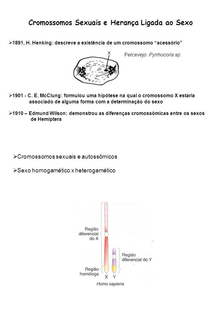 Cromossomos Sexuais e Herança Ligada ao Sexo 1891, H. Henking: descreve a existência de um cromossomo acessório 1901 - C. E. McClung: formulou uma hip