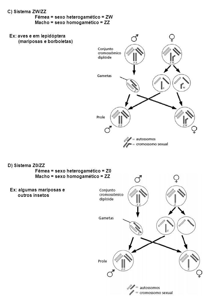 OUTROS SISTEMAS DE DETERMINAÇÃO DO SEXO E) Razão: ______________Nº de X_________________ Nº de conjuntos haplóides de autossômicos Ex: Drosophila fêmeas normais = 2/2 = 1 Machos normais = 1/2 = 0,5 Razão > 1 = metafêmeas Razão < 0,5 = metamachos Razão entre 0,5 e 1 = intersexo F) Sistemas Múltiplos presença de mais de um par de cromossomos sexuais em pelo menos um dos sexos.