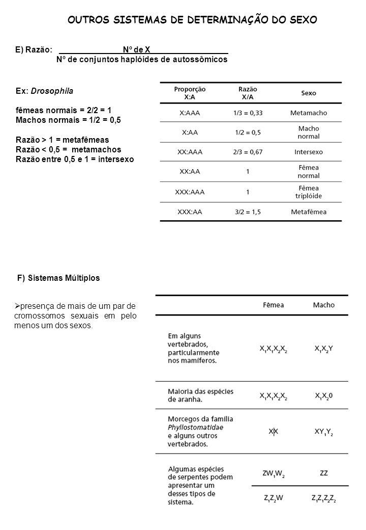 OUTROS SISTEMAS DE DETERMINAÇÃO DO SEXO E) Razão: ______________Nº de X_________________ Nº de conjuntos haplóides de autossômicos Ex: Drosophila fême