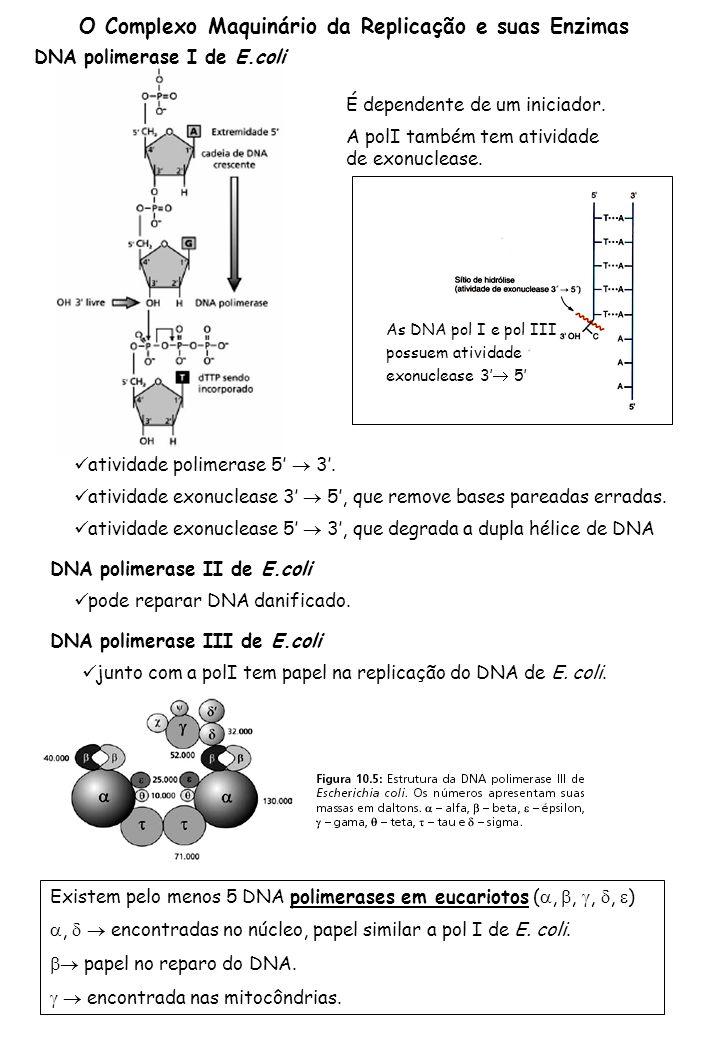 O Complexo Maquinário da Replicação e suas Enzimas DNA polimerase I de E.coli A polI também tem atividade de exonuclease.