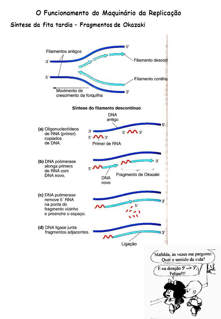 O Funcionamento do Maquinário da Replicação Síntese da fita tardia – Fragmentos de Okazaki