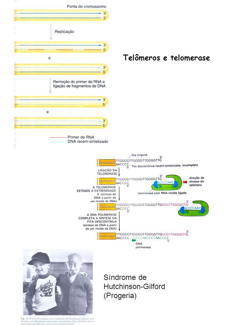 Telômeros e telomerase Síndrome de Hutchinson-Gilford (Progeria)