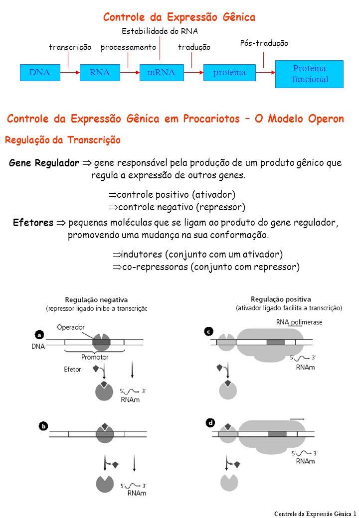 Controle da Expressão Gênica DNARNAmRNAproteína Proteína funcional transcriçãoprocessamento Estabilidade do RNA tradução Pós-tradução Regulação da Tra