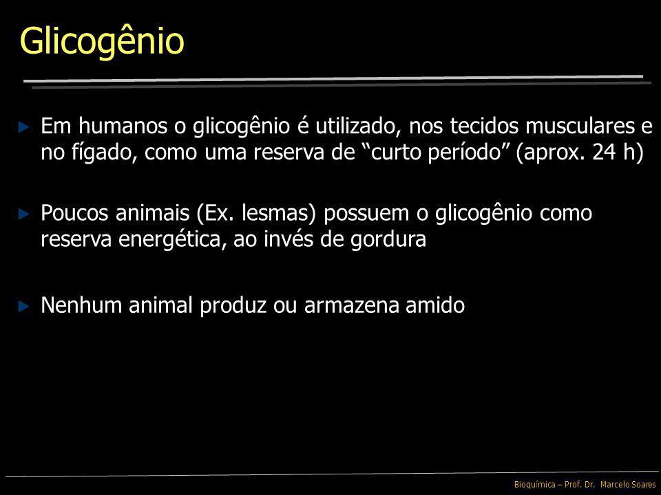 Bioquímica – Prof. Dr. Marcelo Soares Também é um polissacarídeo de α -Glicose, entretanto é encontrado em animais Glicogênio As ramificações da moléc