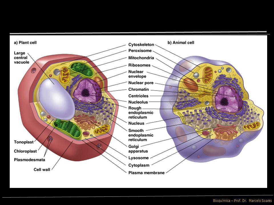 Bioquímica – Prof. Dr. Marcelo Soares Celulose É o principal componente da Parede Celular das células vegetais e o composto orgânico mais abundante no