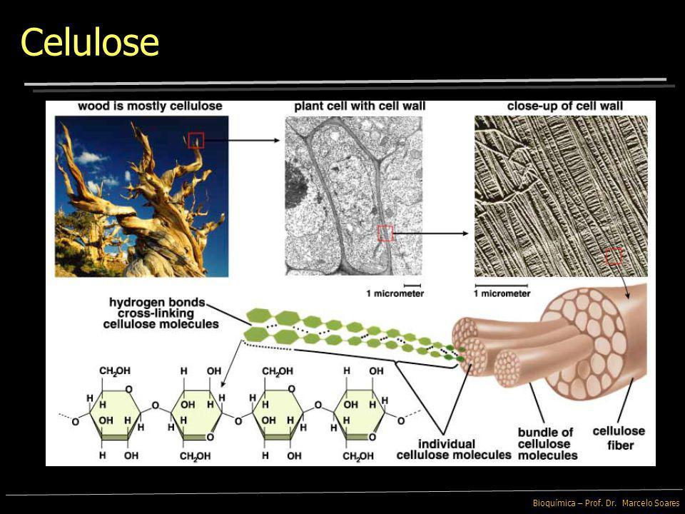 Bioquímica – Prof. Dr. Marcelo Soares Celulose As Fibras são essenciais para a otimização das funções intestinais Grãos inteiros, vegetais e frutos in