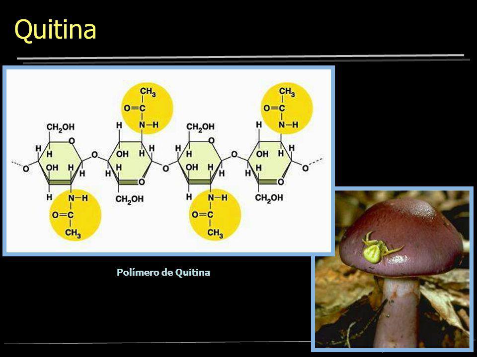 Bioquímica – Prof. Dr. Marcelo Soares N H C O CH 3 NH C O O O CH 2 OH O O O O O O O O N H C O CH 3 NH C O N H C O N-acetil glicosamina