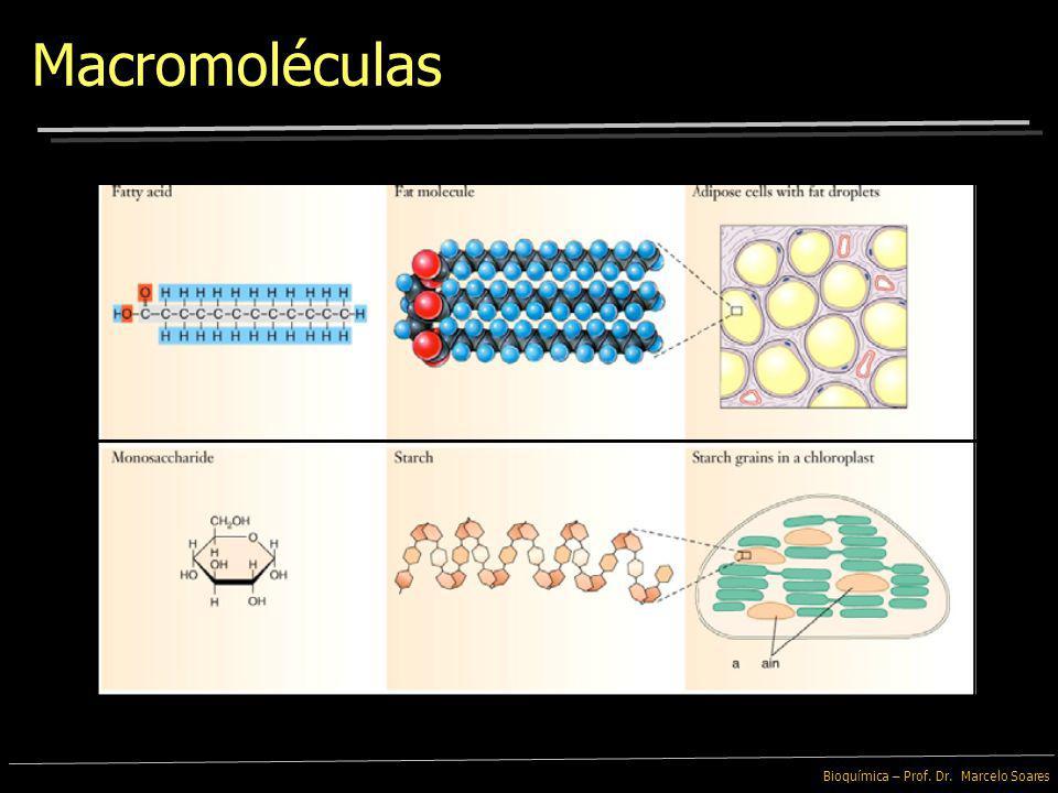 Bioquímica – Prof. Dr. Marcelo Soares Macromoléculas