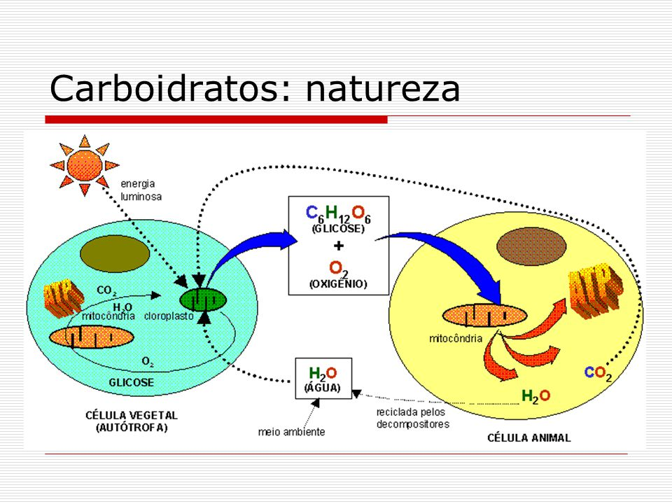 Fotossíntese Graças ao pigmento clorofila, os vegetais convertem a energia luminosa em energia química. Nesta conversão, formam-se compostos estáveis