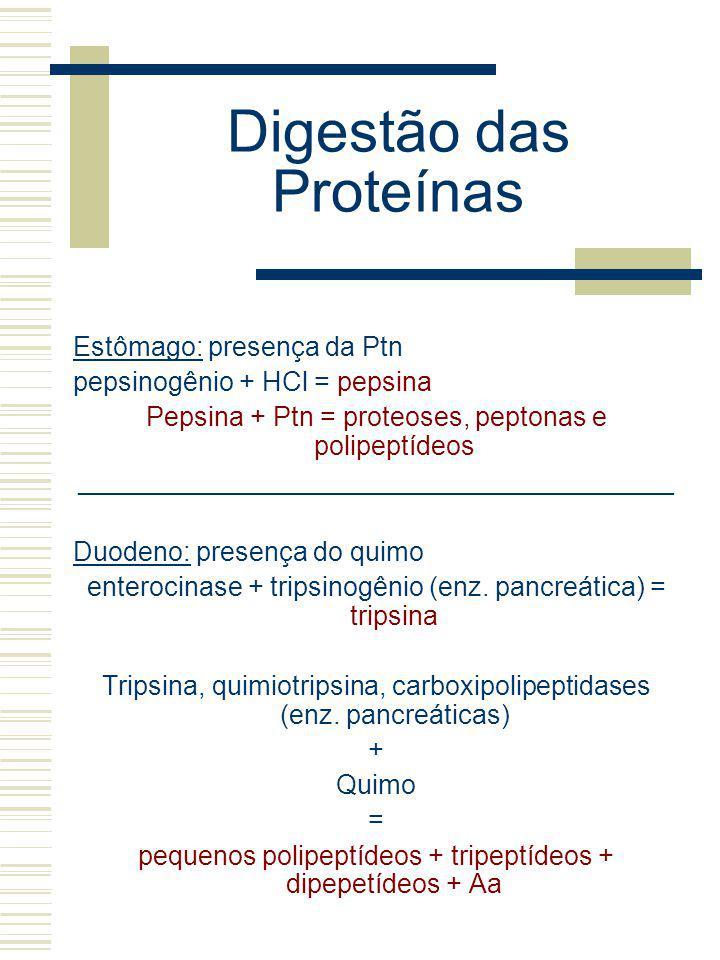 Digestão das Proteínas Estômago: presença da Ptn pepsinogênio + HCl = pepsina Pepsina + Ptn = proteoses, peptonas e polipeptídeos ____________________
