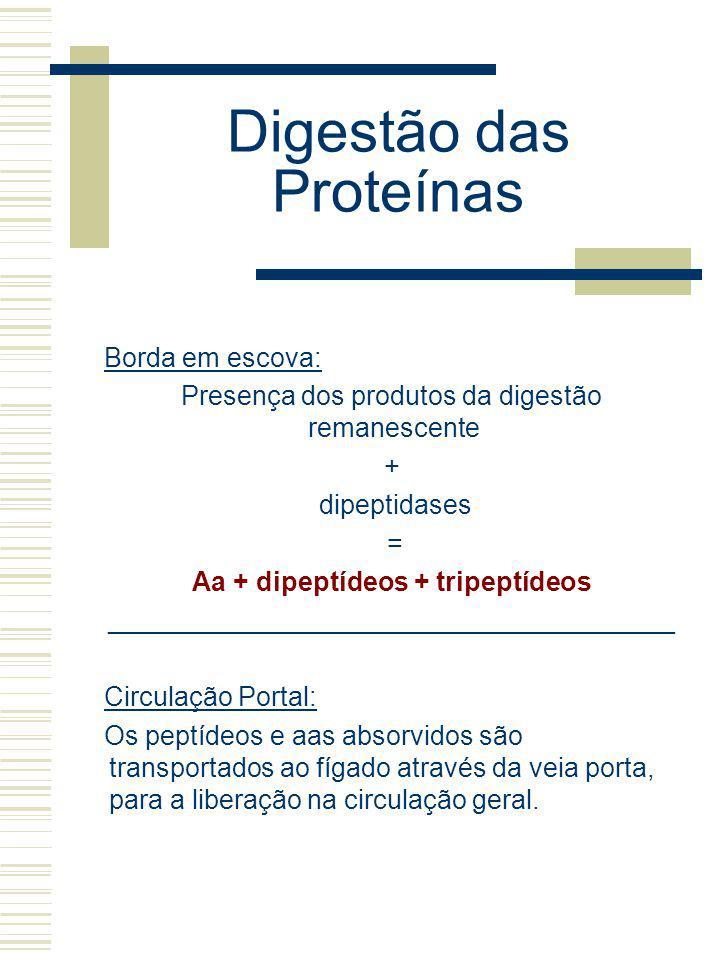 Digestão das Proteínas Borda em escova: Presença dos produtos da digestão remanescente + dipeptidases = Aa + dipeptídeos + tripeptídeos ______________