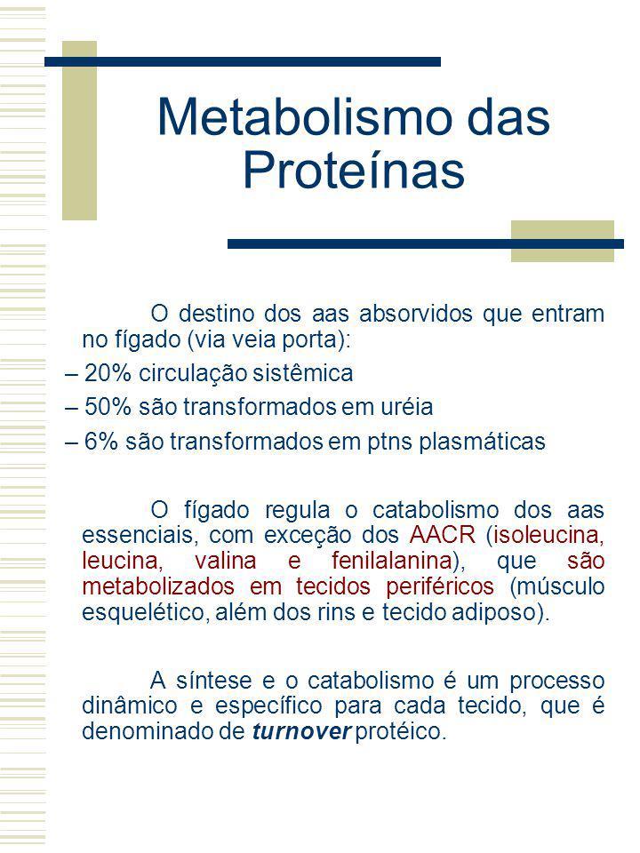 Metabolismo das Proteínas O destino dos aas absorvidos que entram no fígado (via veia porta): – 20% circulação sistêmica – 50% são transformados em ur