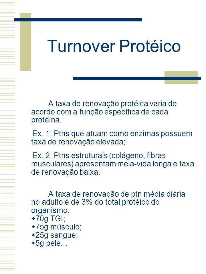 Turnover Protéico A taxa de renovação protéica varia de acordo com a função específica de cada proteína. Ex. 1: Ptns que atuam como enzimas possuem ta