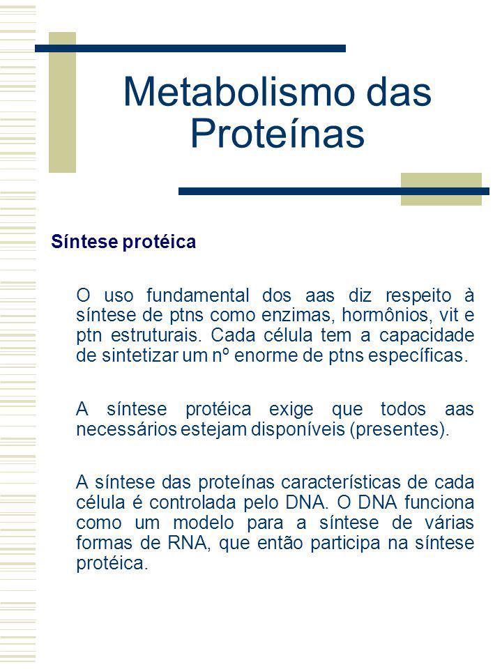 Metabolismo das Proteínas Síntese protéica O uso fundamental dos aas diz respeito à síntese de ptns como enzimas, hormônios, vit e ptn estruturais. Ca