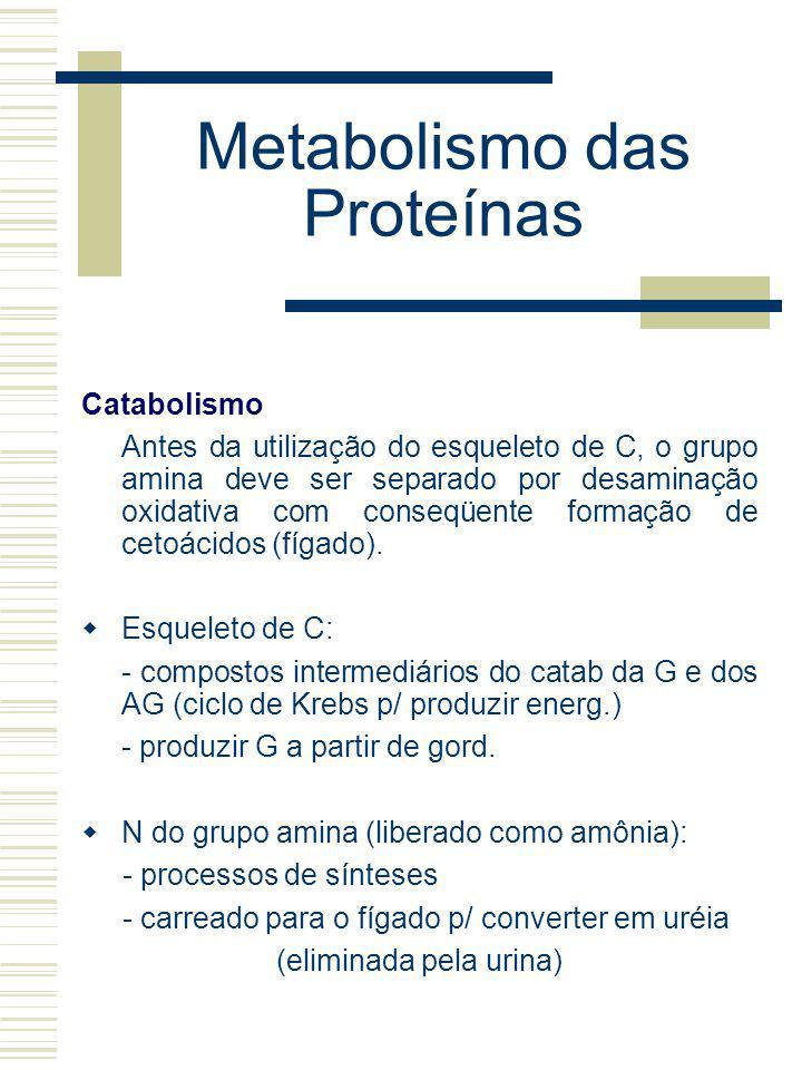 Metabolismo das Proteínas Catabolismo Antes da utilização do esqueleto de C, o grupo amina deve ser separado por desaminação oxidativa com conseqüente