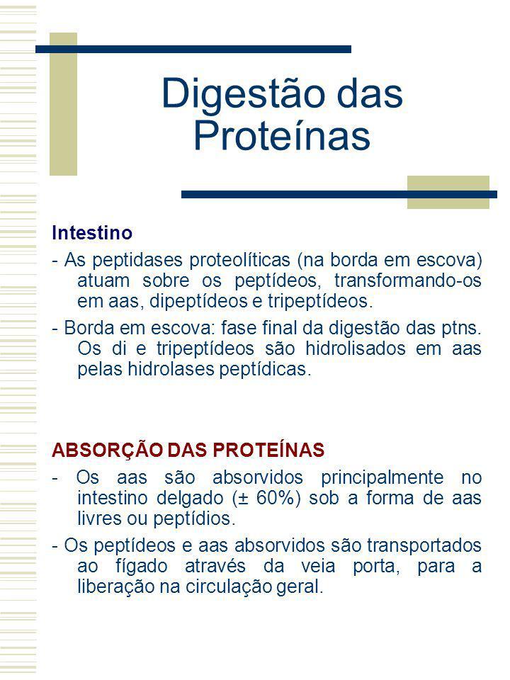 Digestão das Proteínas Intestino - As peptidases proteolíticas (na borda em escova) atuam sobre os peptídeos, transformando-os em aas, dipeptídeos e t
