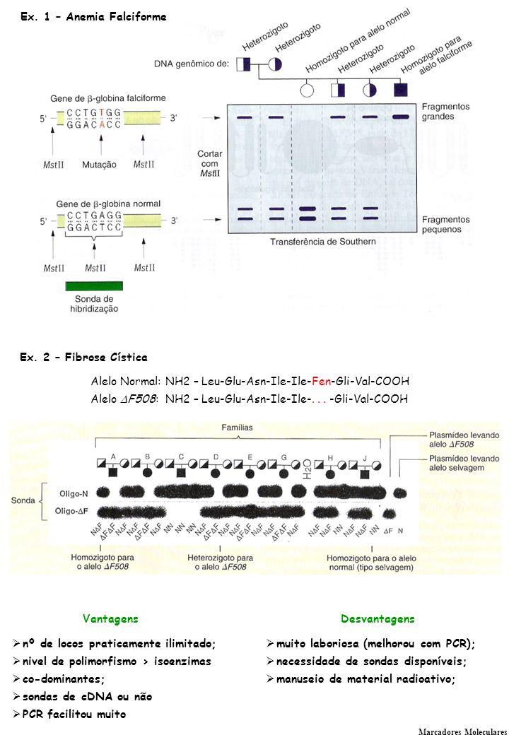 Marcadores Moleculares Vantagens Desvantagens muito laboriosa (melhorou com PCR); necessidade de sondas disponíveis; manuseio de material radioativo; nº de locos praticamente ilimitado; nivel de polimorfismo > isoenzimas co-dominantes; sondas de cDNA ou não PCR facilitou muito Ex.