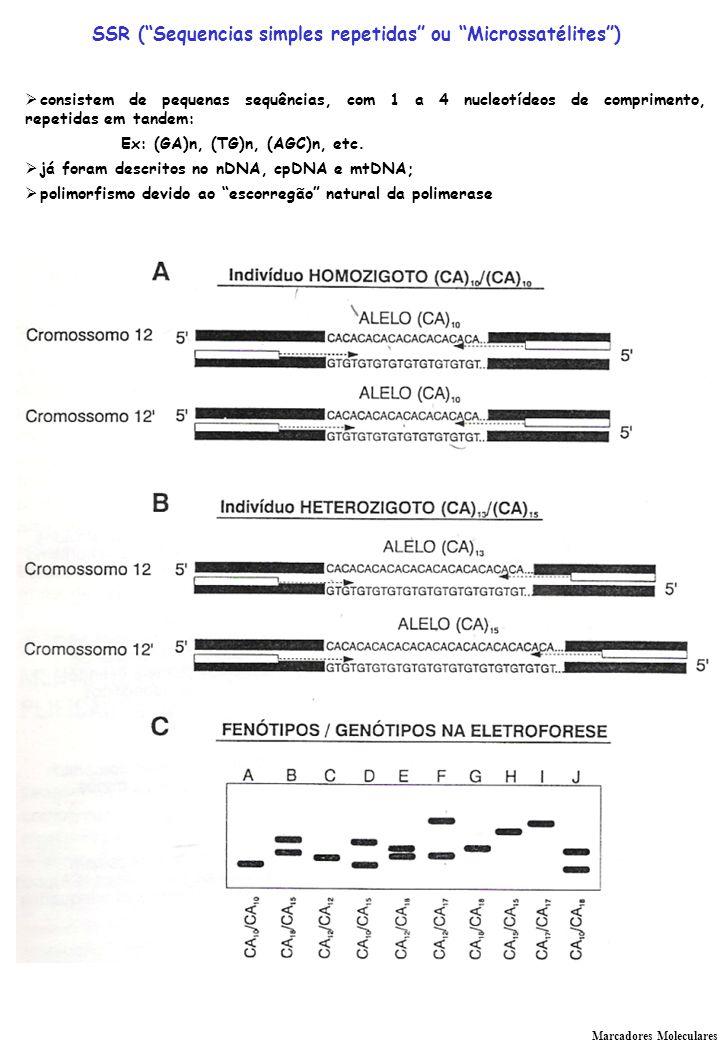 Marcadores Moleculares SSR (Sequencias simples repetidas ou Microssatélites) consistem de pequenas sequências, com 1 a 4 nucleotídeos de comprimento, repetidas em tandem: Ex: (GA)n, (TG)n, (AGC)n, etc.