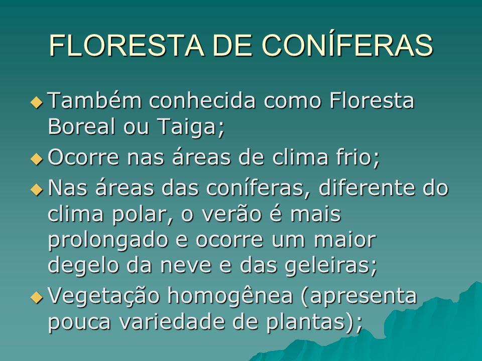 FLORESTA DE CONÍFERAS Também conhecida como Floresta Boreal ou Taiga; Também conhecida como Floresta Boreal ou Taiga; Ocorre nas áreas de clima frio;