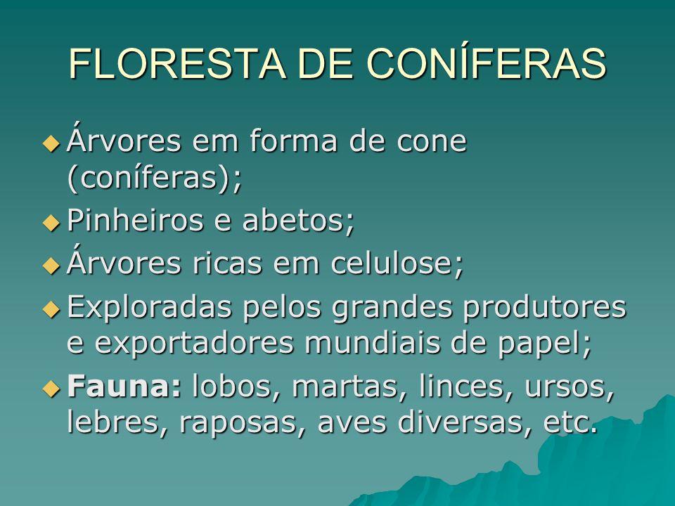FLORESTA DE CONÍFERAS Árvores em forma de cone (coníferas); Árvores em forma de cone (coníferas); Pinheiros e abetos; Pinheiros e abetos; Árvores rica