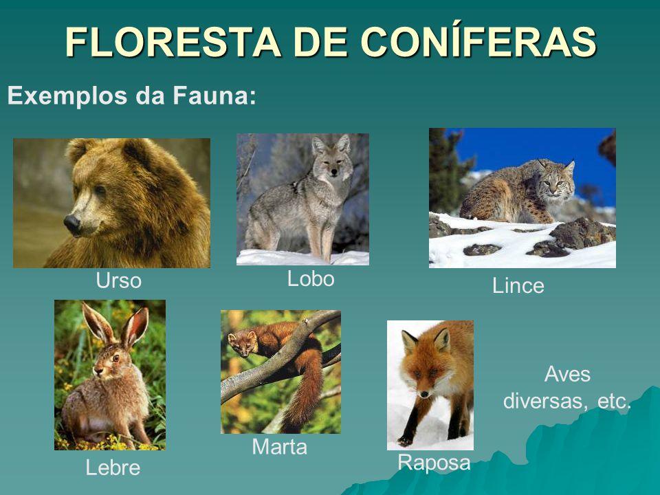 FLORESTA DE CONÍFERAS Exemplos da Fauna: Urso Lobo Lebre Raposa Lince Marta Aves diversas, etc.