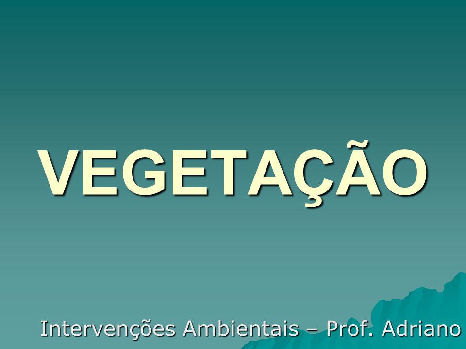 VEGETAÇÃO Intervenções Ambientais – Prof. Adriano