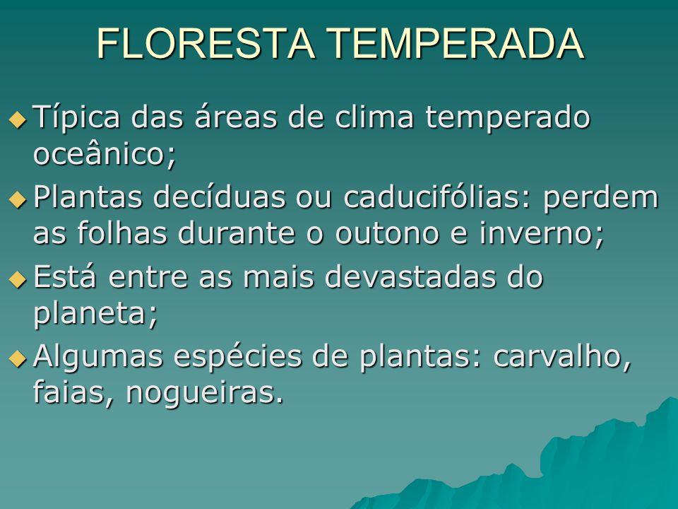 FLORESTA TEMPERADA Típica das áreas de clima temperado oceânico; Típica das áreas de clima temperado oceânico; Plantas decíduas ou caducifólias: perde