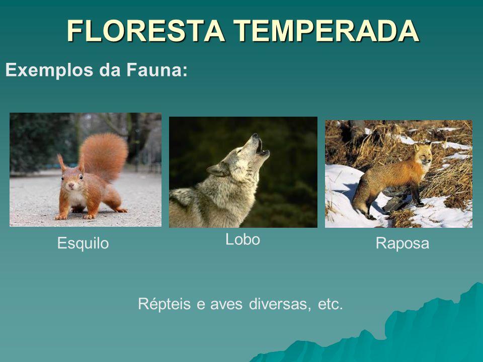 FLORESTA TEMPERADA Exemplos da Fauna: Esquilo Lobo Raposa Répteis e aves diversas, etc.