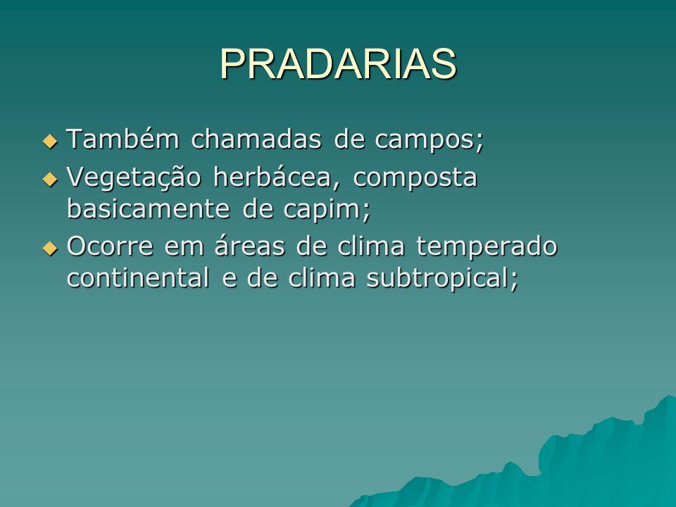 PRADARIAS Também chamadas de campos; Também chamadas de campos; Vegetação herbácea, composta basicamente de capim; Vegetação herbácea, composta basica