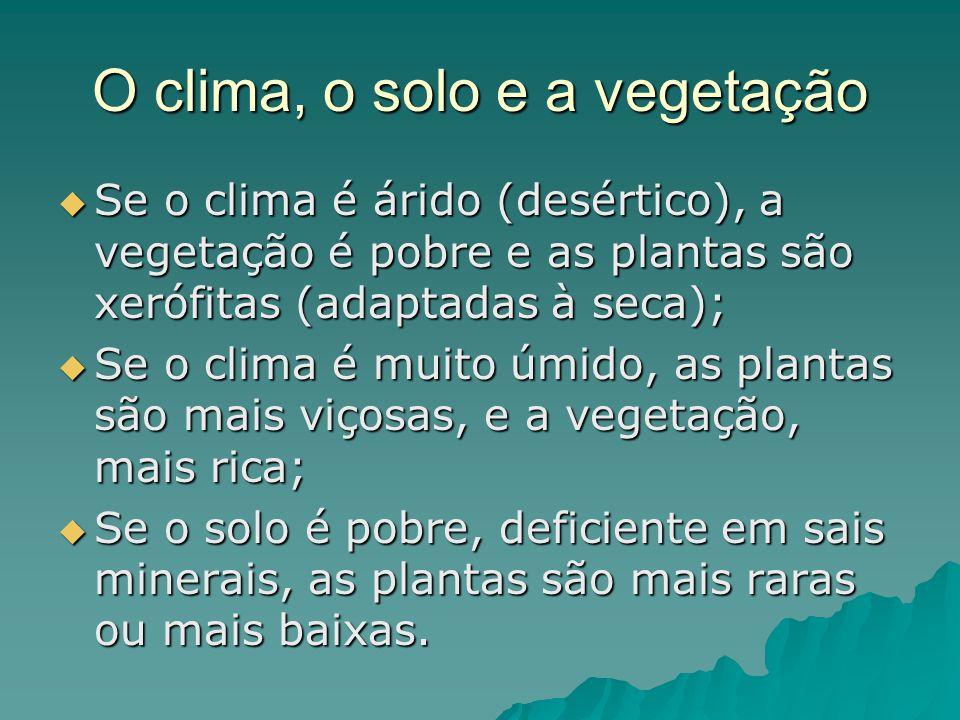O clima, o solo e a vegetação Se o clima é árido (desértico), a vegetação é pobre e as plantas são xerófitas (adaptadas à seca); Se o clima é árido (d