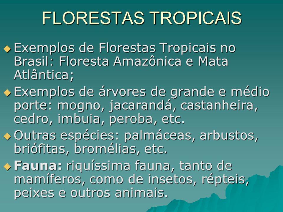 FLORESTAS TROPICAIS Exemplos de Florestas Tropicais no Brasil: Floresta Amazônica e Mata Atlântica; Exemplos de Florestas Tropicais no Brasil: Florest
