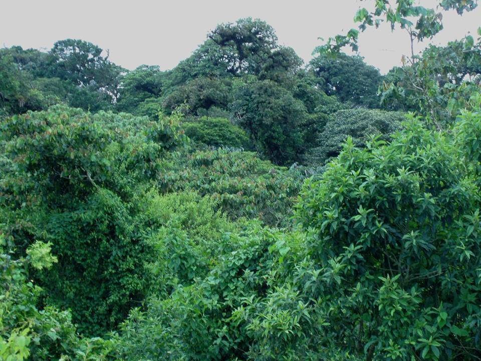 FORMAÇÕES DESÉRTICAS Clima árido (seco) ou semi-árido; Clima árido (seco) ou semi-árido; Solos arenosos ou pedregosos; Solos arenosos ou pedregosos; Vegetação rara, com plantas xerófitas (adaptadas à seca); Vegetação rara, com plantas xerófitas (adaptadas à seca); Destaque para as cactáceas (cactos); Destaque para as cactáceas (cactos); Ocorre em todos os continentes, exceto na Europa; Ocorre em todos os continentes, exceto na Europa; Fauna: camelos, lagartos, cobras, ratos, etc.