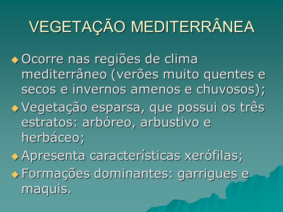 VEGETAÇÃO MEDITERRÂNEA Ocorre nas regiões de clima mediterrâneo (verões muito quentes e secos e invernos amenos e chuvosos); Ocorre nas regiões de cli