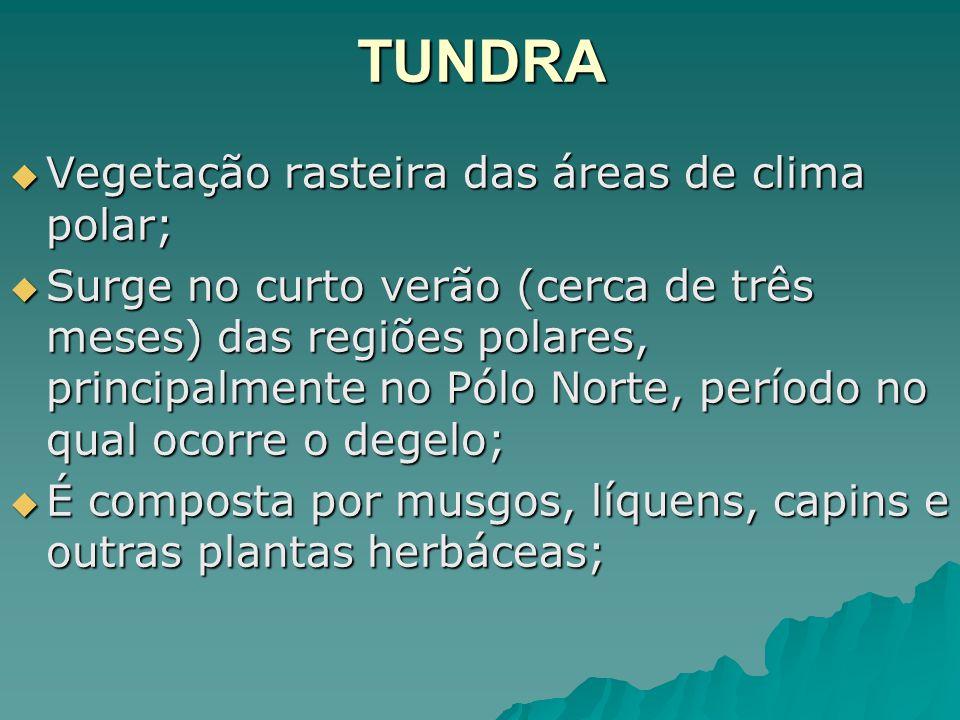 TUNDRA Vegetação rasteira das áreas de clima polar; Vegetação rasteira das áreas de clima polar; Surge no curto verão (cerca de três meses) das regiõe