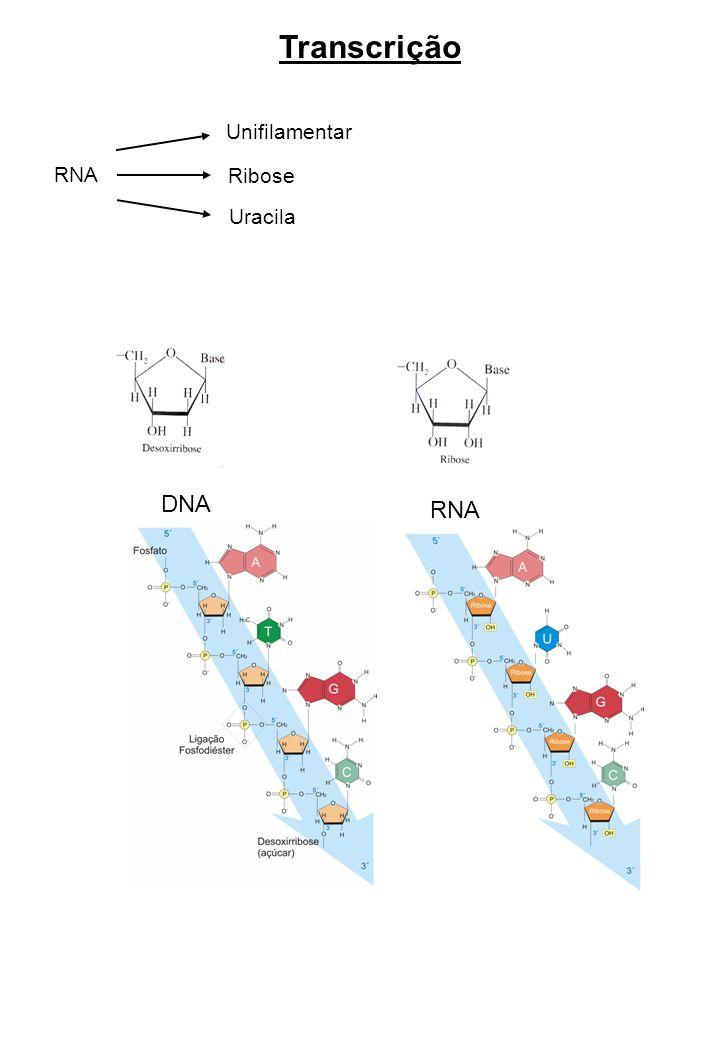 Do DNA à proteína – O fluxo de informação gênica DNA (gene)mRNAproteína transcriçãotradução Transcrição Propriedades do RNA 1.