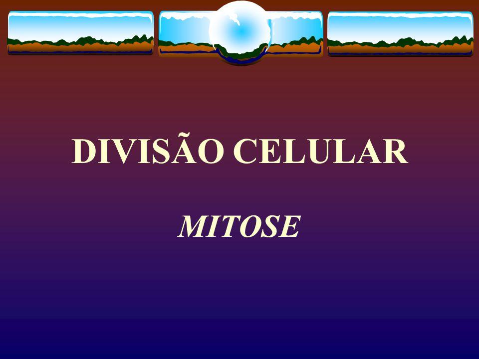 Citocinese em célula animal e vegetal