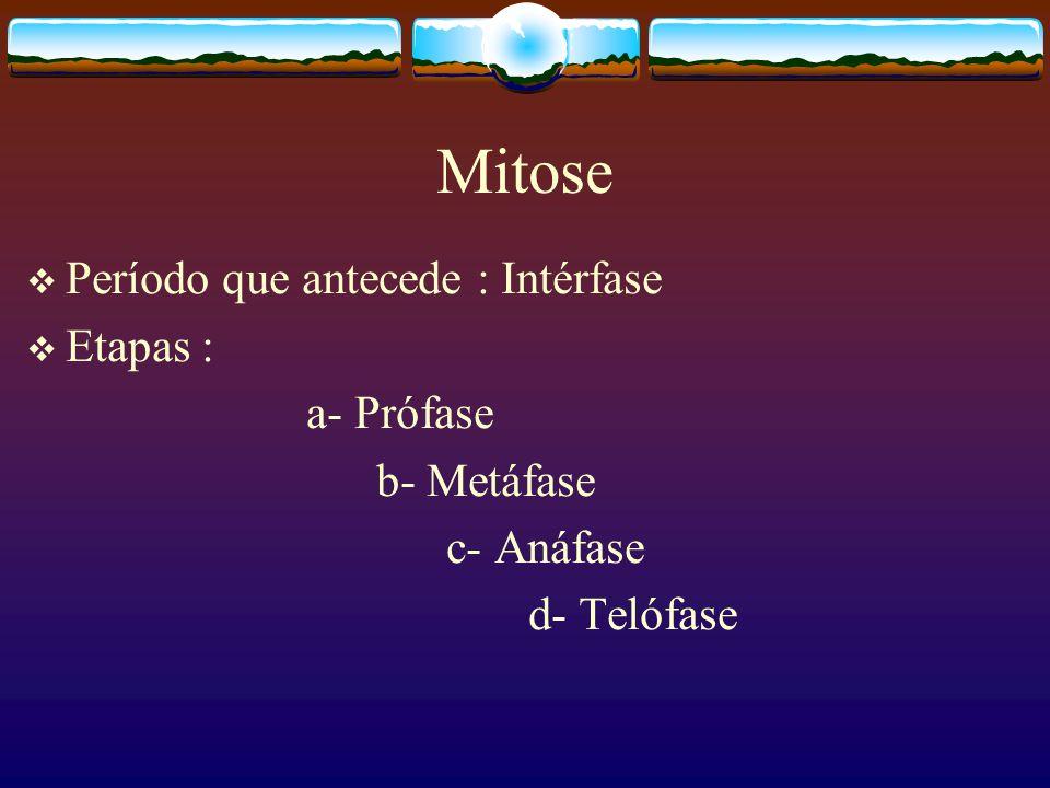 Mitose Período que antecede : Intérfase Etapas : a- Prófase b- Metáfase c- Anáfase d- Telófase