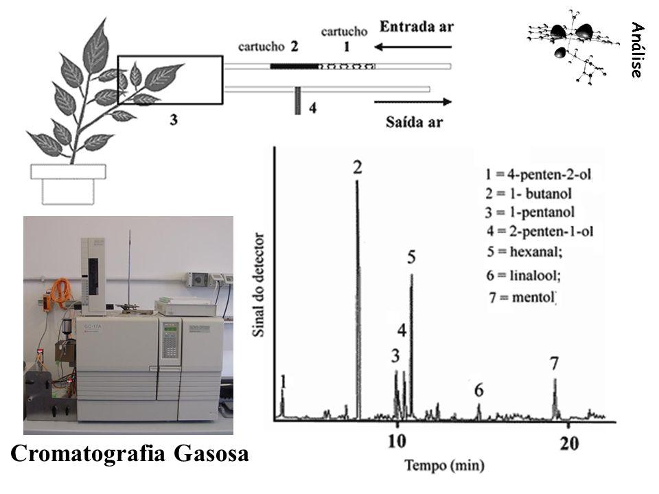 Análise 3 Cromatografia Gasosa