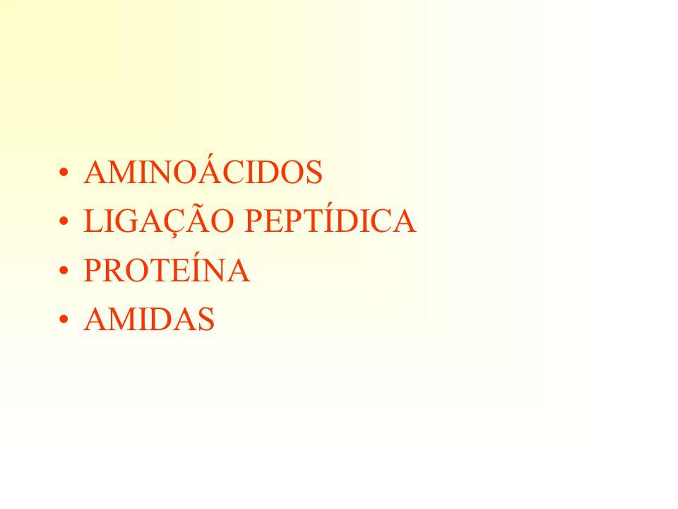 AMINOÁCIDOS LIGAÇÃO PEPTÍDICA PROTEÍNA AMIDAS