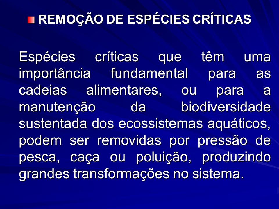 REMOÇÃO DE ESPÉCIES CRÍTICAS Espécies críticas que têm uma importância fundamental para as cadeias alimentares, ou para a manutenção da biodiversidade