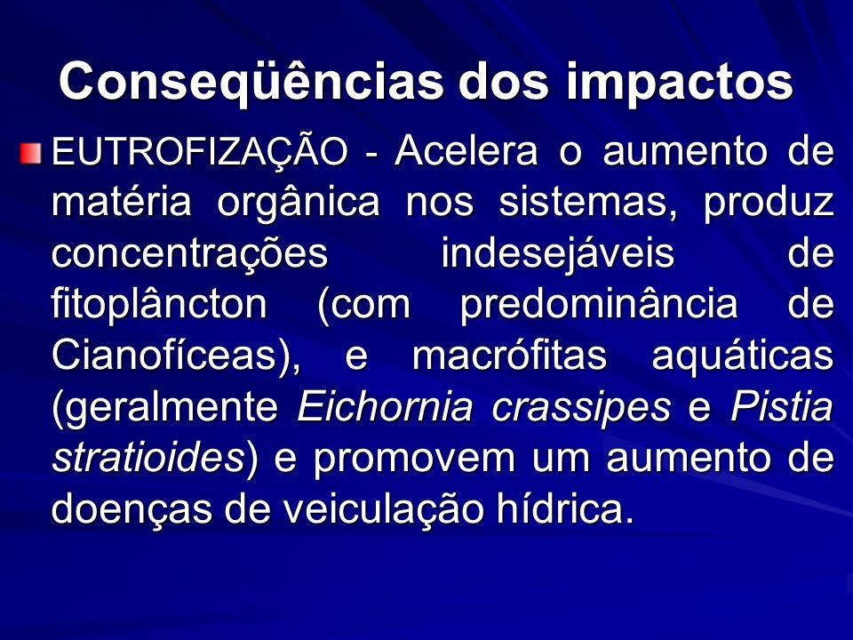 Conseqüências dos impactos EUTROFIZAÇÃO - Acelera o aumento de matéria orgânica nos sistemas, produz concentrações indesejáveis de fitoplâncton (com p
